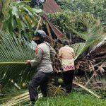 Reaksi Cepat, Bhabinkamtibmas Polres Lhokseumawe Bantu Evakuasi Pohon Tumbang Yang Menimpa Rumah Warga