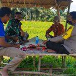 Harmonis, Duo Babin Birem Bayeun Komsos dengan Petani di Tengah Sawah