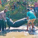 Mayat Lelaki Tanpa Identitas di temukan Mengapung di Sungai Tambon Tunong Aceh Utara.