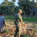 Koptu Apriadi Bantu Petani Rawat Tanaman Semangka